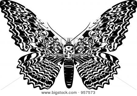 black and white butterfly on white background poster