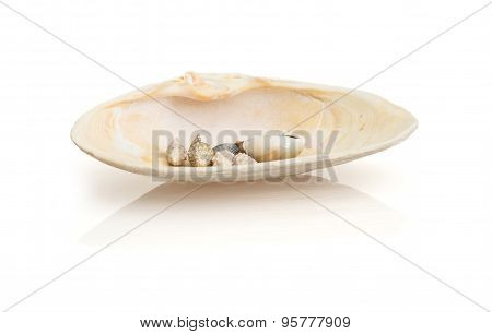 Isolated Sea Shells