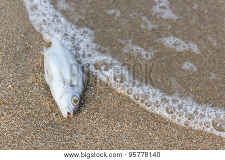 Death Fish On The Beach, Global Warming.