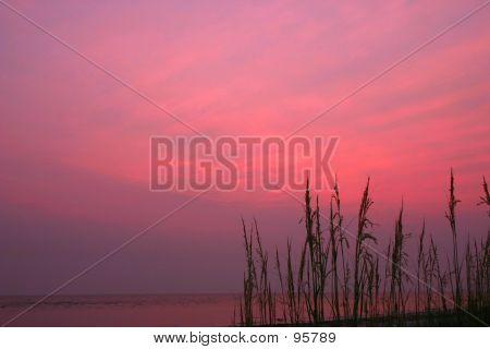 Sea Oat's At Sunset