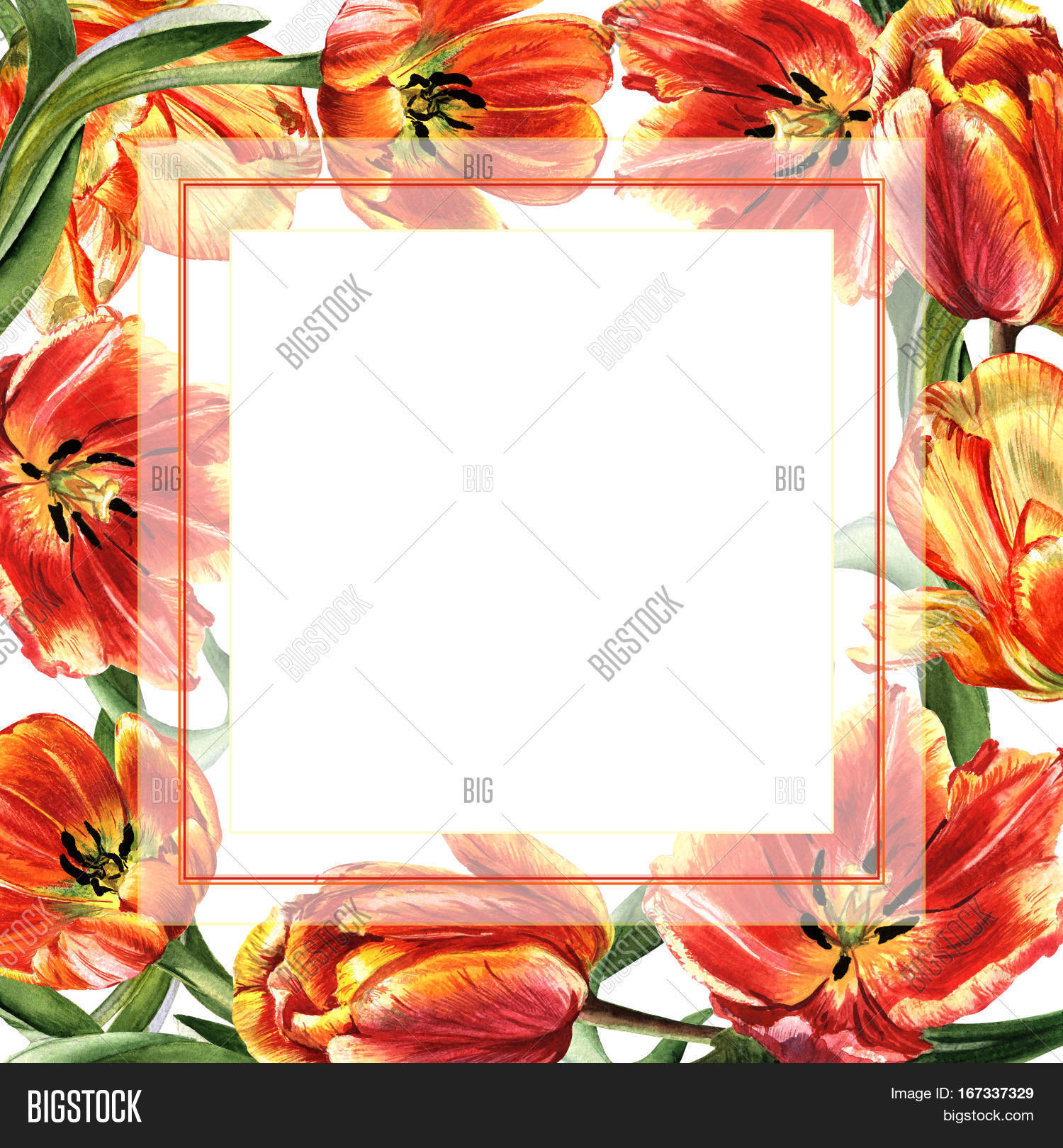 Wildflower Tulip Flower Frame In A Watercolor Style Isolated Full Name Of The Plant