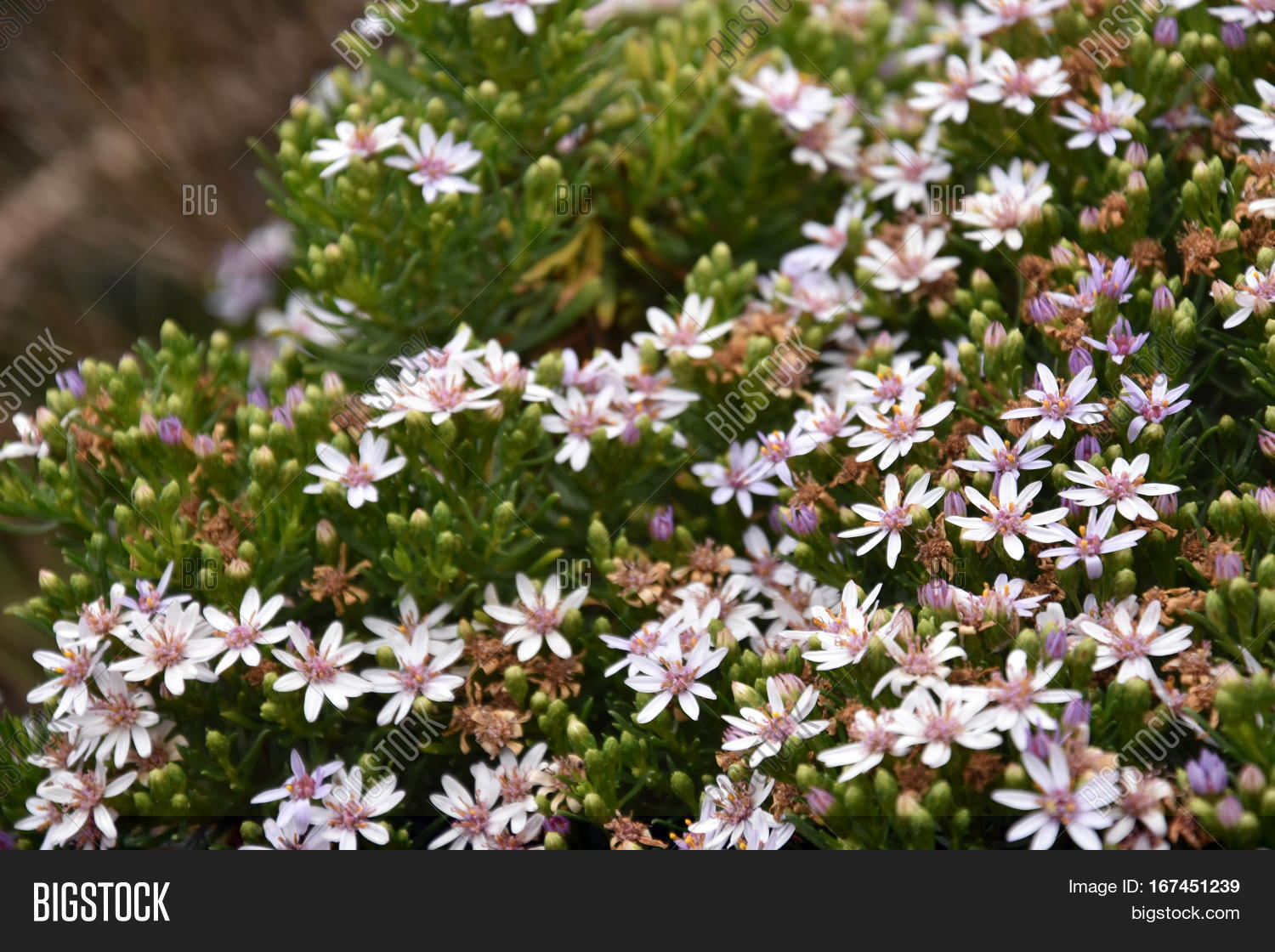 Cluster Wild Flowers Image Photo Free Trial Bigstock