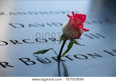 small rose in the dark shade at the 911 memorial world trade center, New York