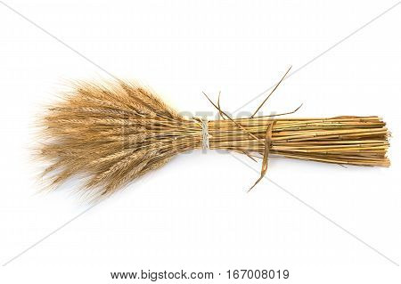 sheaf of barley on the white background
