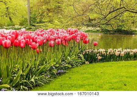 tilip park Keukenhof, lake garden, Netherlands, Holland