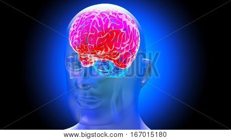 Human brain on dark background. 3D render