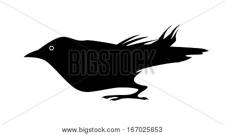 Black jackdaw. Silhouette of bird. Vector isolated.
