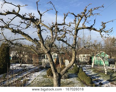 Allotments in snowy wintry weather