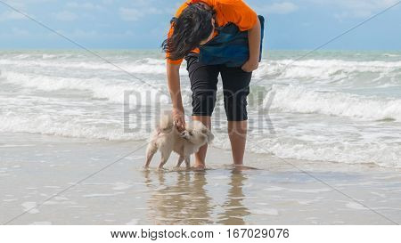 Dog so cute beige color mixed breed with Shih-Tzu Pomeranian and Poodle travel at beach on beach bed