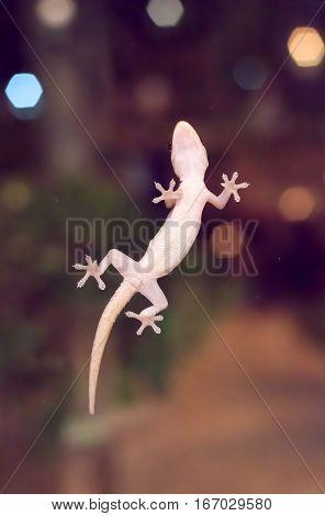 A little lizard alone in the world