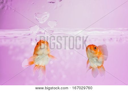 love concept Goldfish blew bubbles into heart shapes in pink water.