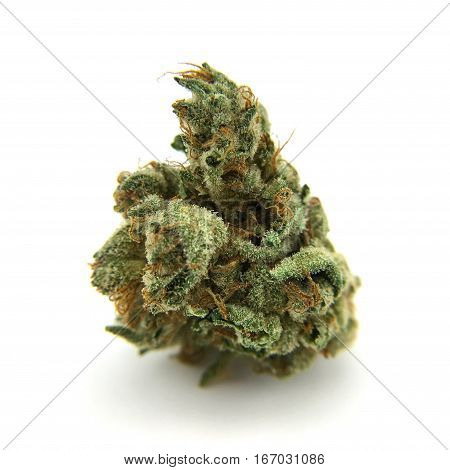 Cannabis flower (Amnesia Haze) isolated on white background. poster