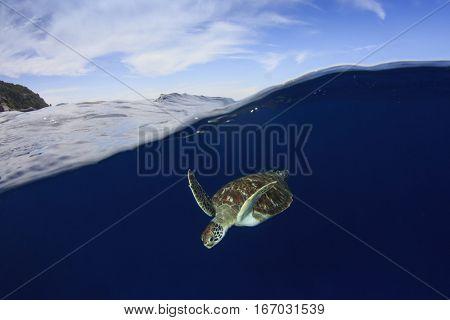 Sea Turtle over under split photo. Turtle ocean and sky
