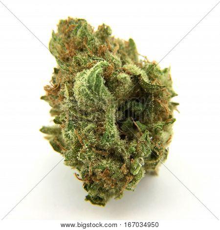 Cannabis flower (White Lavendar) isolated on white background.