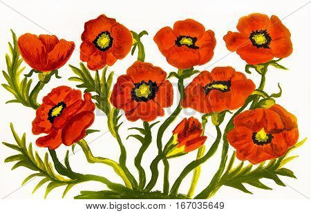 Many red poppies on white background oil painting. Original size 20 x 30 sm.