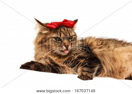 Cat With With A Red Bow On Her Head And Heart Near On A White Background With Space For Writing