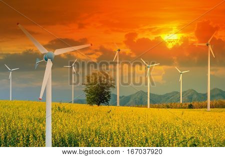 Wind Turbine for alternative energy in Yellow flowers field of Crotalaria with power poles and light shines sunset. Eco power concept