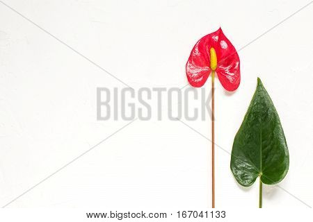 Anthurium flower and leaf on a white textured background. Also known as mens happiness flowers and leaves are heart-shaped. Simple background to the Valentines day with space for text