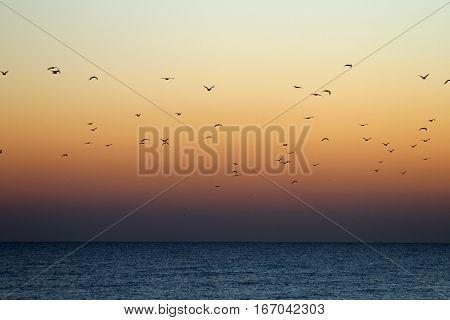 Bando de Gaivotas a voar ao pôr do sol