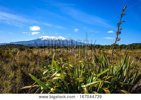 Landscape View Of Mt Ruapehu In Tongariro National Park, Nz