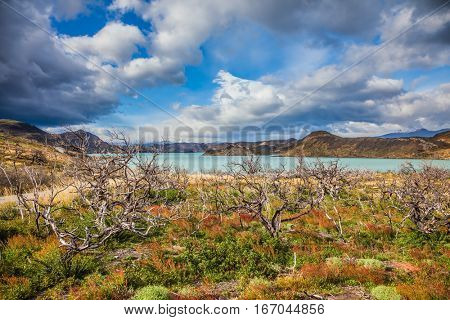 Strong winds of Patagonia. Chile, Patagonia, Torres del Paine National Park - Biosphere Reserve. The concept of eco-tourism