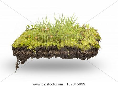 section green grass and moss isolated on white