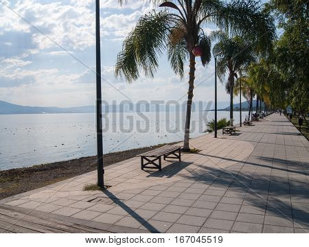An inviting lake promenade with benches and palm trees