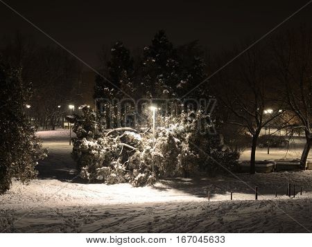 Lamppost And Trees In Winter