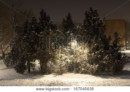 Lamppost And Trees In Winter Evening