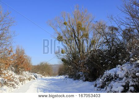 country road in snow with tractor tracks