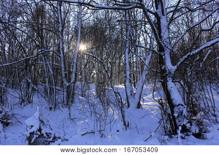 snow in wood with sun