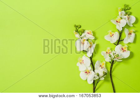 Flat lay photo of a creative freelancer woman workspace desk with copy space background. Image taken from above, top view. Minimal style with colorful paper backdrop and flowers