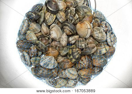 Raw Vongole Clams Bivalve Molluscs in Bag