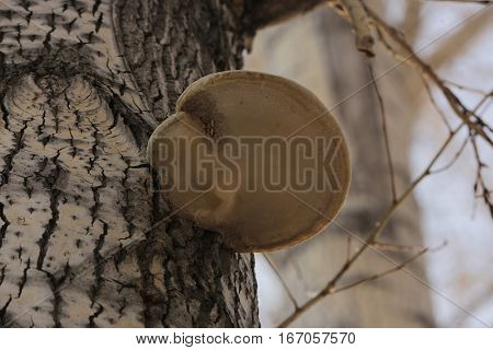 flora, nature, trees, mushrooms, polypore, landscape, landscape, species, basidiomycetes, Polyporaceae