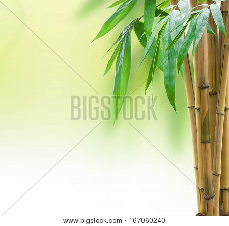 Yellow Bamboo With Leaves