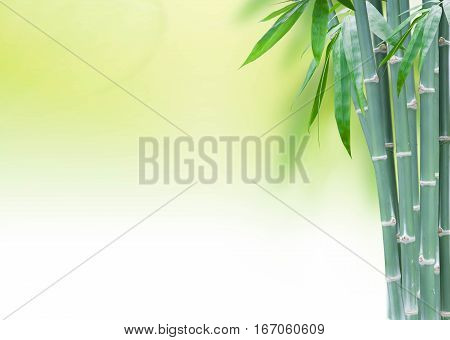 green bamboo with leaves with copy space