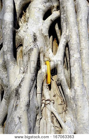 Root on the trunk of tree texture with yellow candle accent closeup
