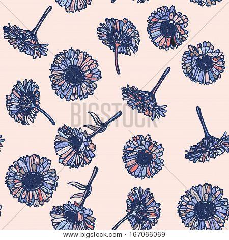 autumn calendula flowers sketch blue outline on pink background. Vector illustration