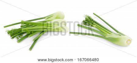 closeup fresh fennel bulb isolated on white background