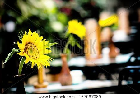 Sunflower in the foreground decorating the table of a restaurant.