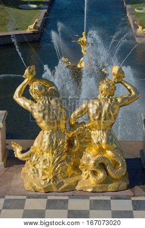 SAINT PETERSBURG, RUSSIA - JULY 03, 2015: Sculpture of two tritons blowing shell. A fragment of a Large cascade of fountains in Peterhof