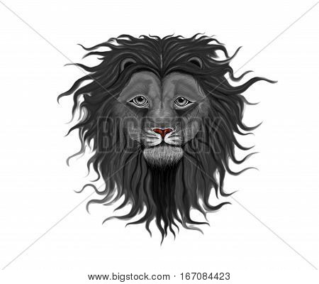 Black lion head with a fluffy mane of curls and waves reaching