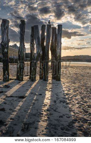 Shadows of tree trunks breakwater on sandy beach in Saint-Malo, Bretagne France