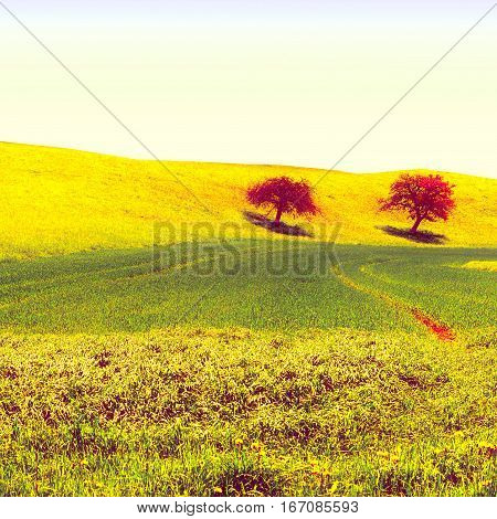 Trees Surrounded by Sloping Meadows in Switzerland Vintage Style Toned Picture