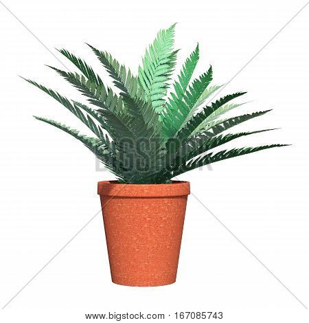 3D rendering of a fern plant in a red flower pot isolated on white background