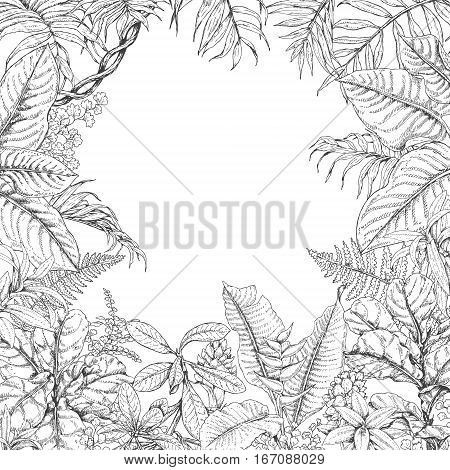 Hand drawn branches and leaves of tropical plants. Monochrome square floral frame. Dieffenbachia ficus fern palm fronds sketch. Black and white illustration coloring page for adult.