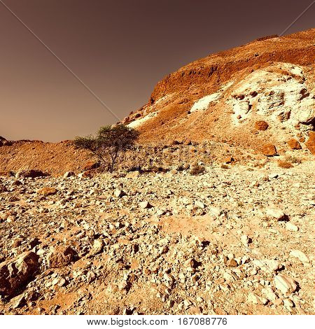 Canyon in the Judean Desert on the West Bank of the Jordan River at Sunset Vintage Style Toned Picture