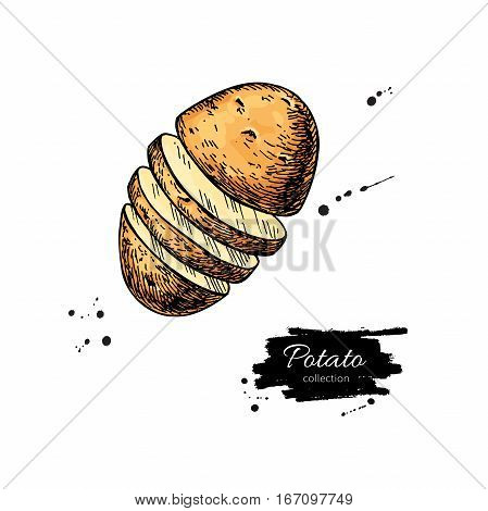 Potato vector drawing. Isolated hand drawn sliced potatoe. Vegetable artistic style illustration. Detailed vegetarian food sketch. Farm market product.