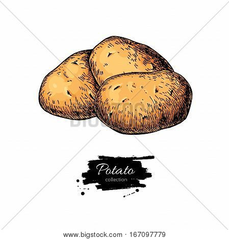 Potato vector drawing. Isolated hand drawn potatoes heap. Vegetable artistic style illustration. Detailed vegetarian food sketch. Farm market product.