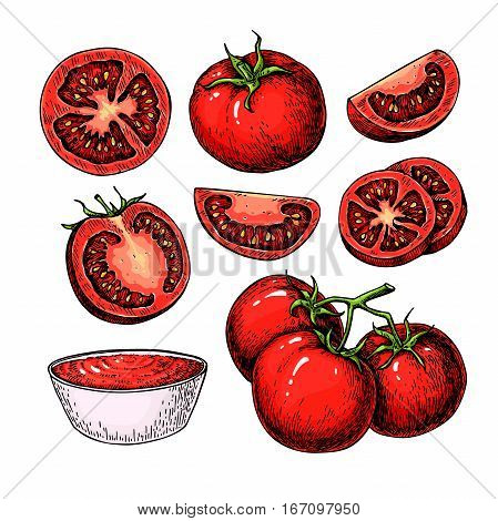 Tomato vector drawing set. Isolated tomato, branch, sliced piece and tomato sauce. Vegetable artistic style illustration. Detailed vegetarian food sketch. Farm market product.  Great for label, banner, poster